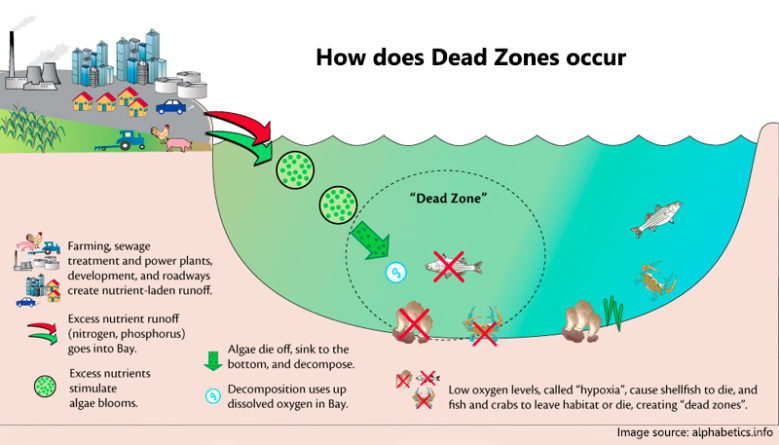 how dead zones occer
