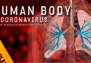 What Other Body Organs Are Impacted By Coronavirus